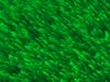 materials_grass