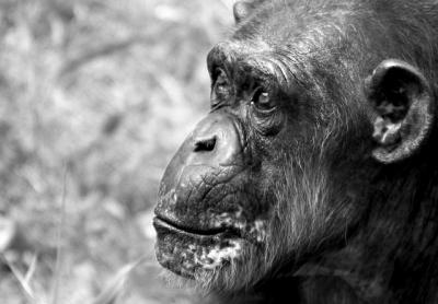 chimp3 crop.thumbnail Zoo Photography Tutorial 9 Steps for Those Perfect Shots