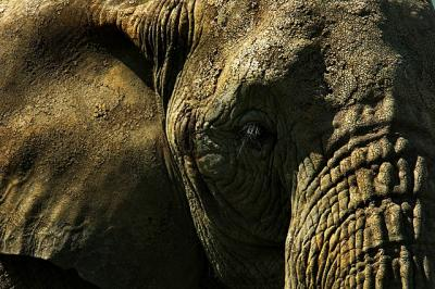 elephant1.thumbnail Zoo Photography Tutorial 9 Steps for Those Perfect Shots